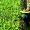 Consultoria em desenvolvimento sustentável